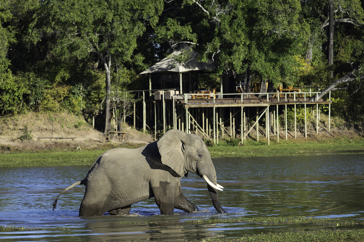 Elephant at Chindeni Bush camp