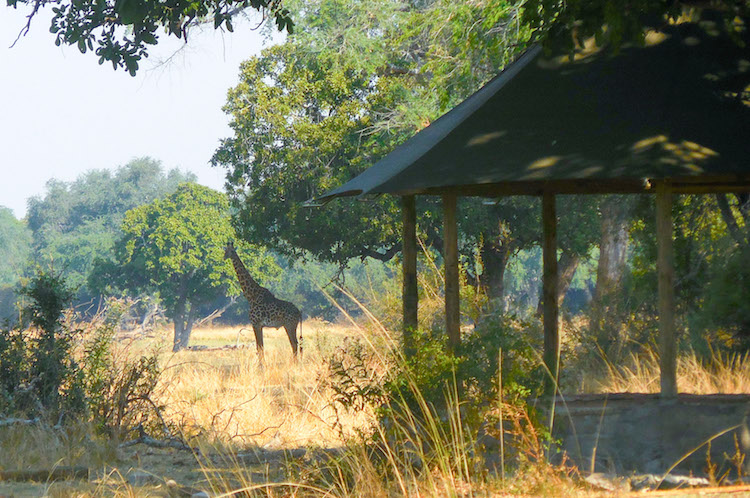 Three Rivers Grounds, South Luangwa