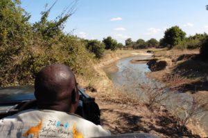 zikomo guide on safari