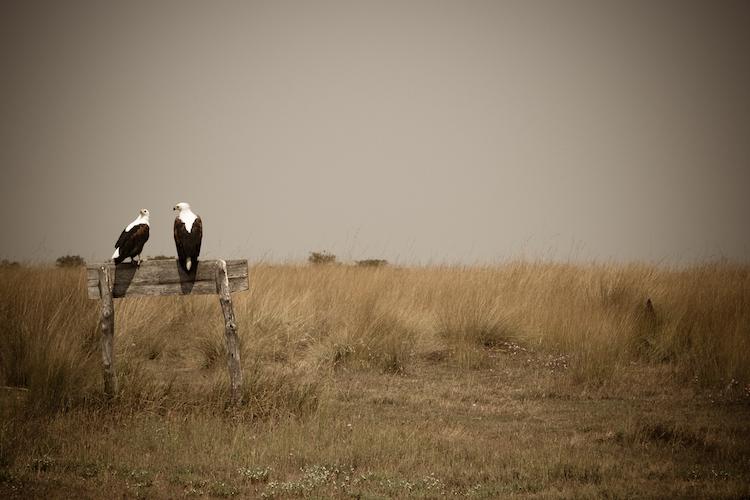 birdlife, Liuwa Plain