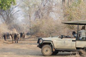 Game drive Lower Zambezi