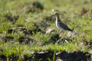 Lower Zambezi Birdlife