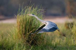 Stork, Lower Zambezi National Park