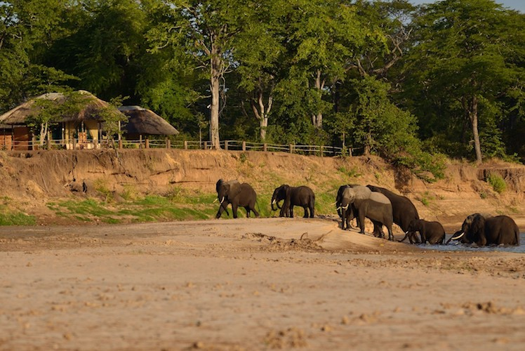 Elephants, South Luangwa