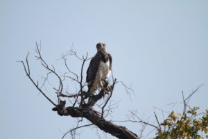 Birdlife south luangwa