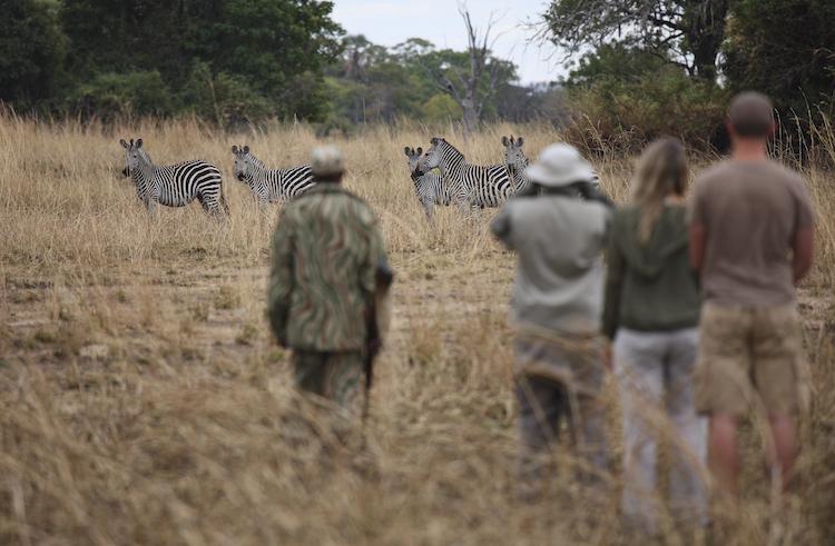 Walking safari in South Luangwa
