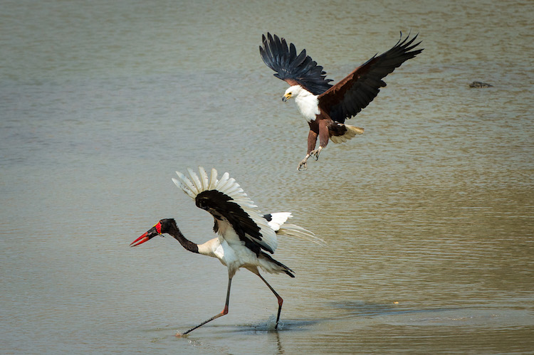 Birdlife at South Luangwa
