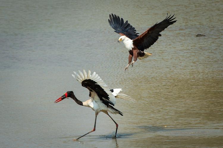 Birdlife at South Luangwa