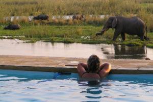 Elephants by pool in LZ