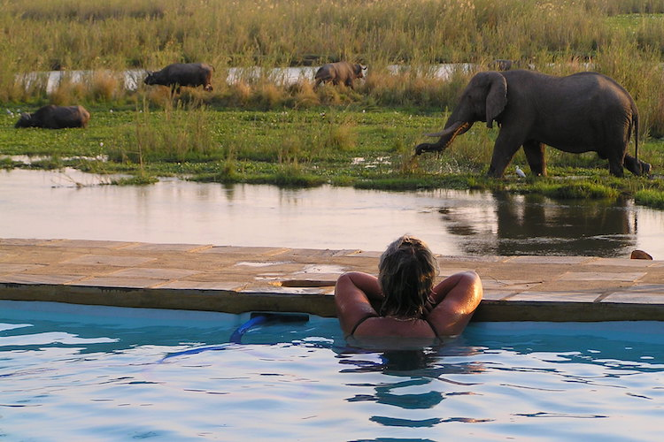 Elephants by pool in LZ