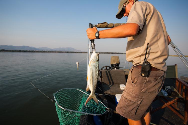 fishing in the lower zambezi