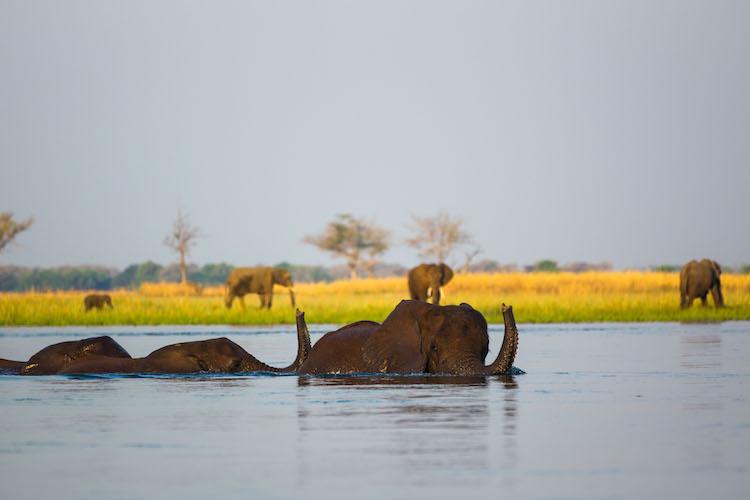 Elephant Lower Zambezi