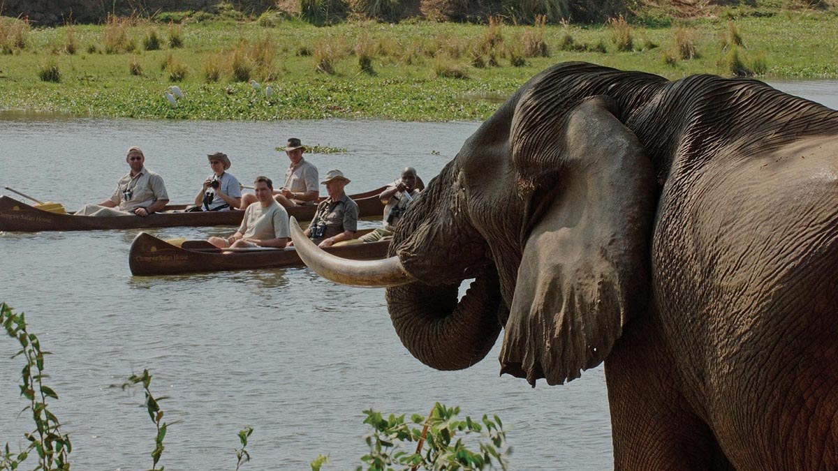 south-luangwa-national-park-classic-beach-bush-zambia-in-style-tours-safari-packages-safaris-adventures-travel-wildlife-africa