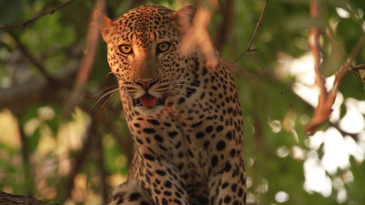 zambia-in-style-green-season-tours-safari-packages-safaris-adventures-ocean-travel-wildlife-africa