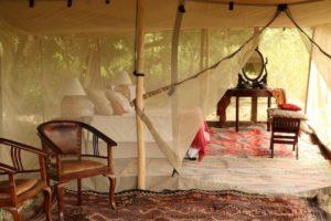 tusk and mane, lower zambezi
