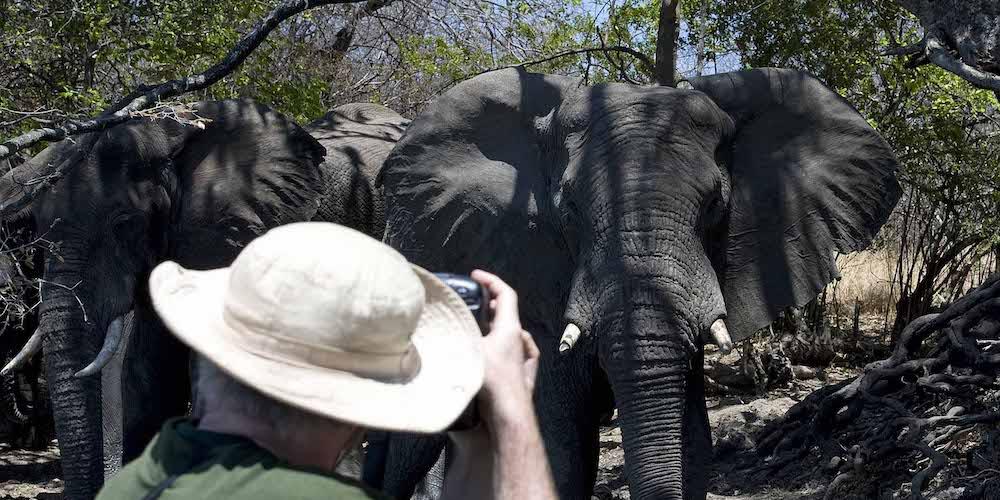Elephants, Kafue National Park