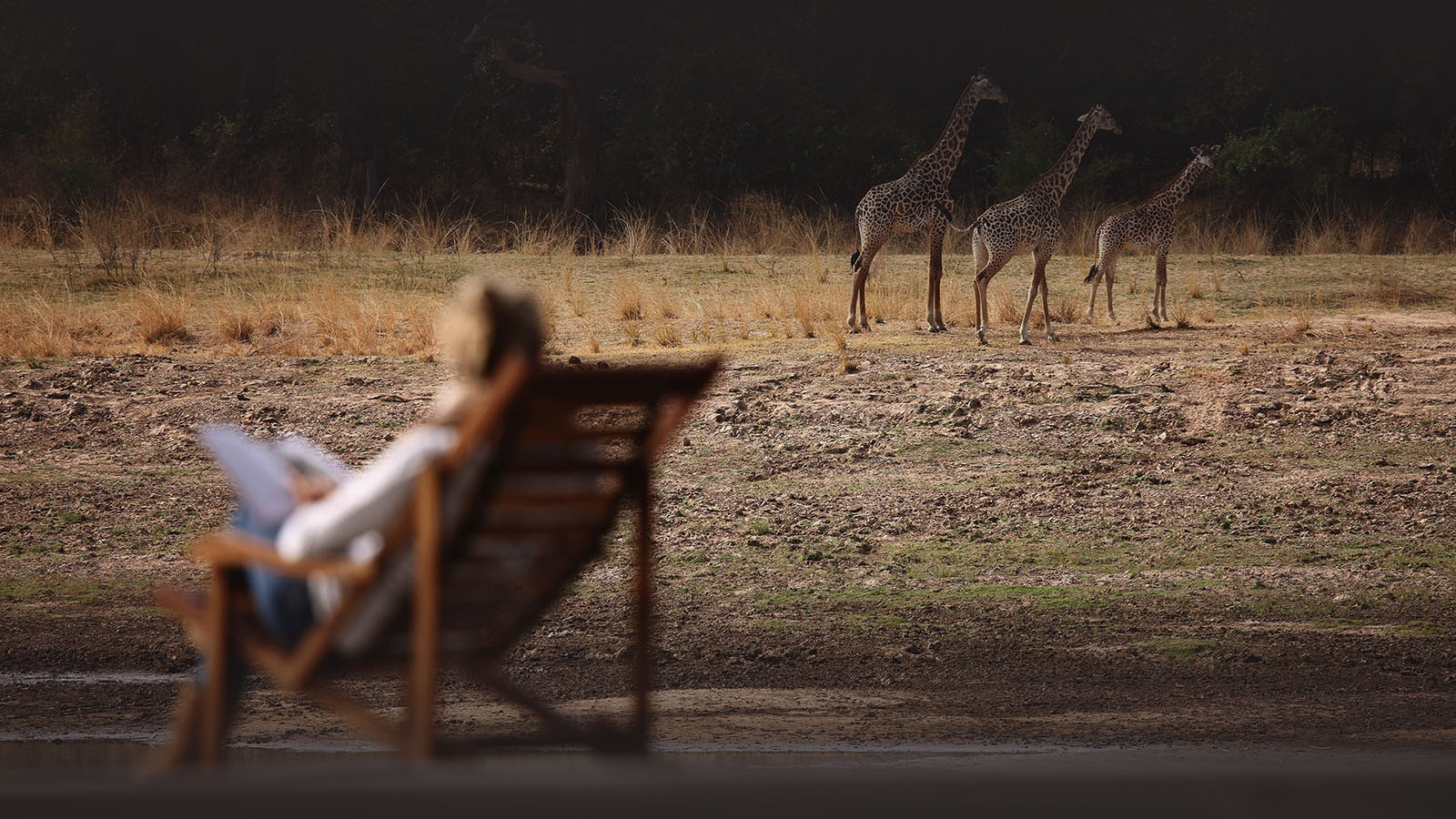 classic-zambia-long-zambia-in-style-safari-packages-tours-giraffes-chinzombo