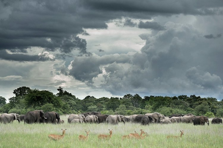 elephants at kafue