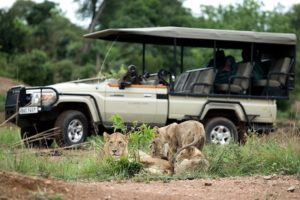 lions at kafue