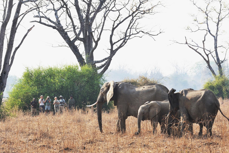 Remote Africa Safari walking safari