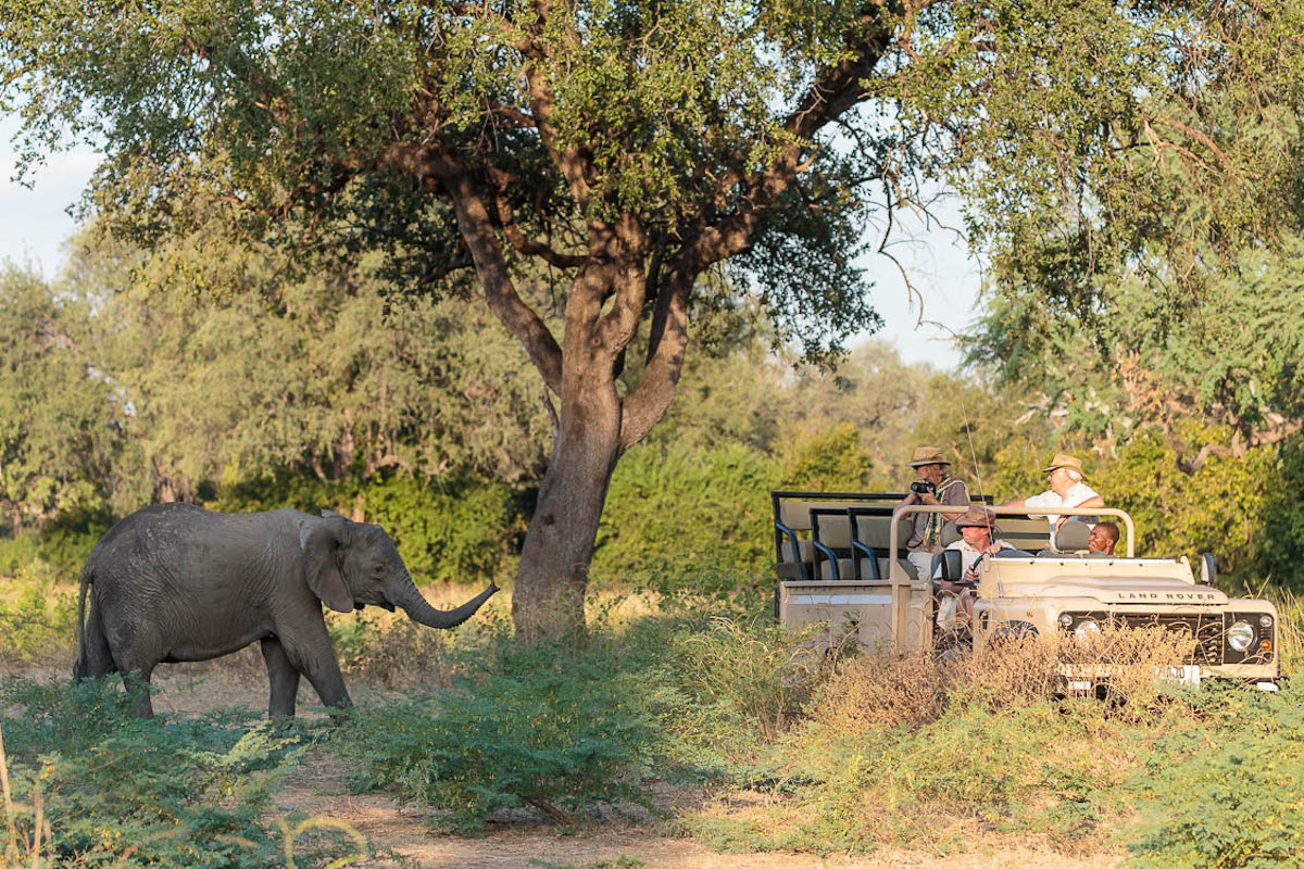 Watching elephants on a game drive, Nkonzi Camp