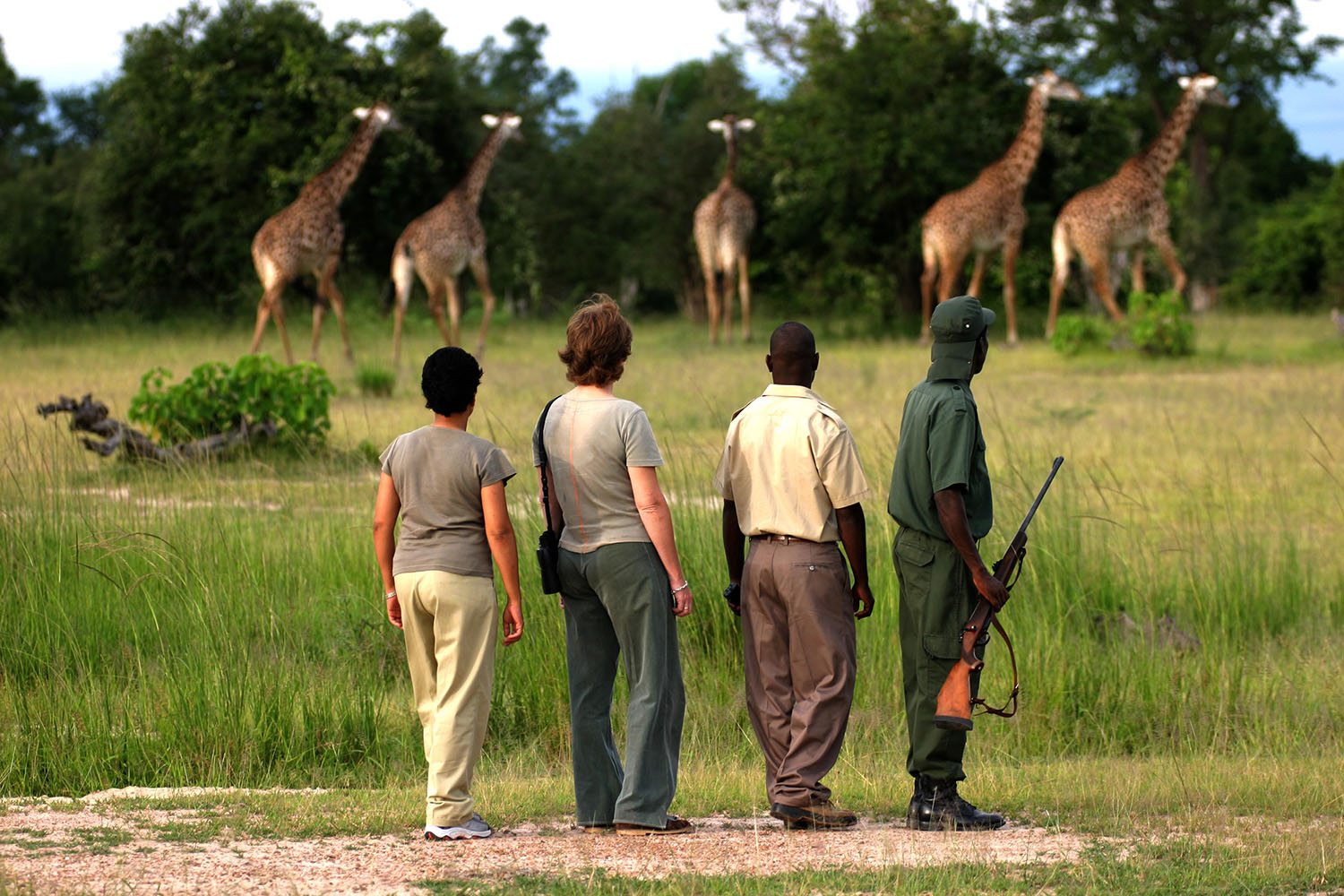 chamilandu bush camp zambia-in-style-tours-safari-packages-lodges-south-luangwa-giraffe-walk