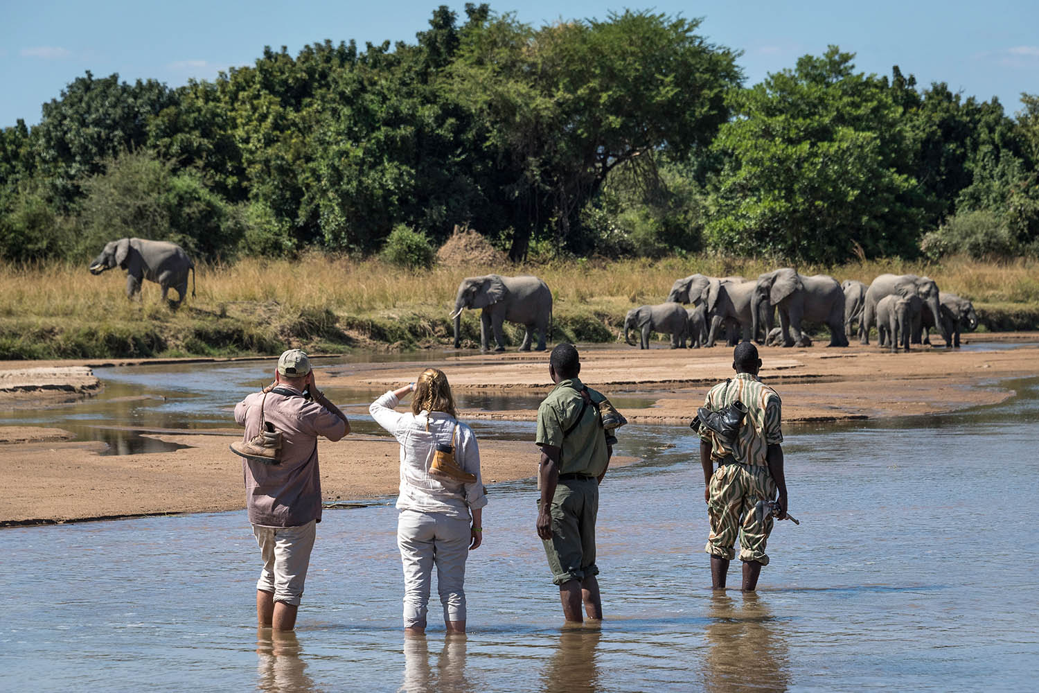 chamilandu bush camp zambia-in-style-tours-safari-packages-lodges-south-luangwa-walking-elephants