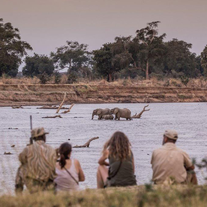 chikoko trails crocodile camp-zambia-in-style-tours-safari-packages-lodges-explore-south-luangwa-national-park-remote-africa-walking-trails