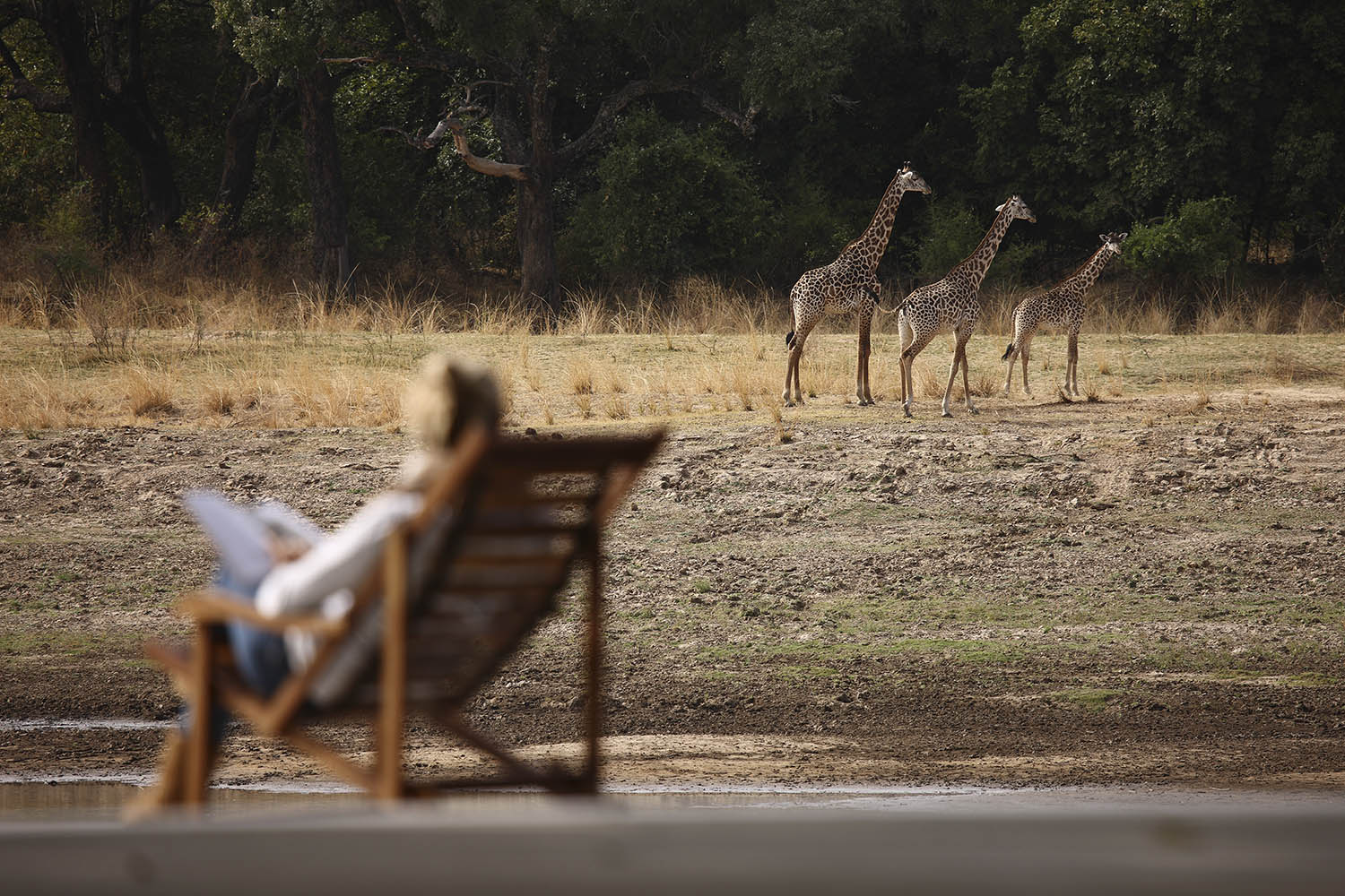 chinzombo-glamourous-lodge-zambia-in-style-tours-safari-packages-lodges-exploring-south-luangwa-national-park-giraffe-view-deck-villa
