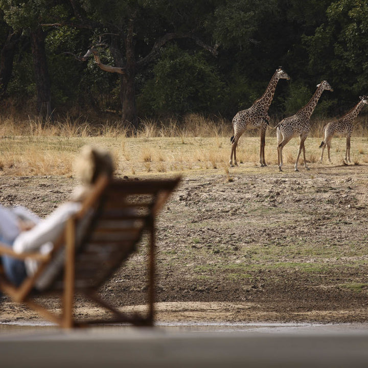 chinzombo-glamourous-lodge-zambia-in-style-tours-safari-packages-lodges-exploring-south-luangwa-national-park-giraffe-views-deck