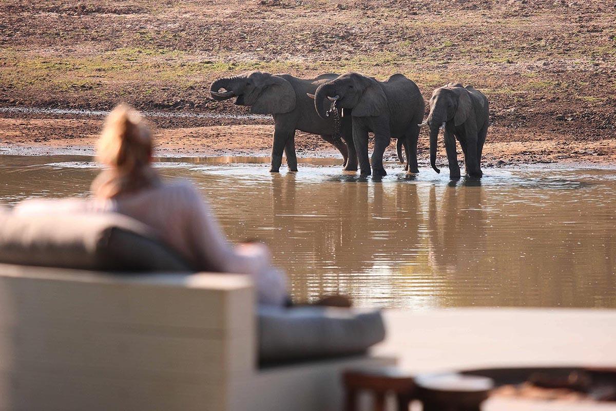 chinzombo-lodge-classic-zambia-short-zambia-in-style-safari-packages-tours-elephants