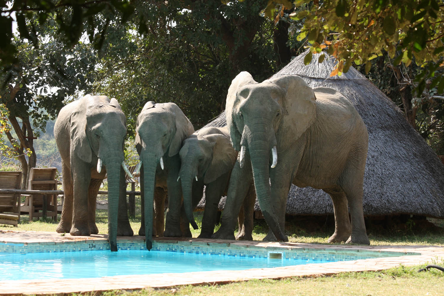 flatdogs-camp-zambia-in-style-tours-safari-packages-lodges-explore-south-luangwa-national-park-elephants-drinking-pool
