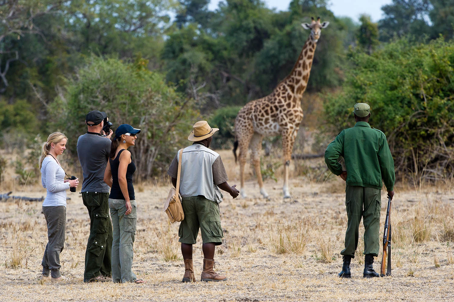 flatdogs-camp-zambia-in-style-tours-safari-packages-lodges-explore-south-luangwa-national-park-walking-safari-with-giraffe