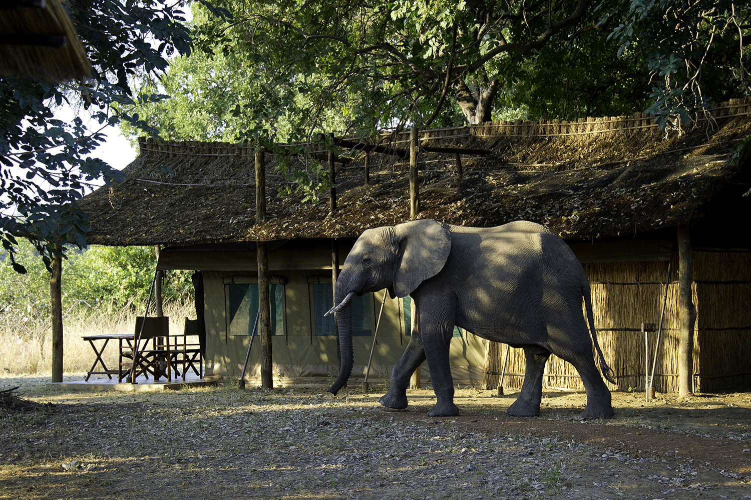 flatdogs-camp-zambia-in-style-tours-safari-packages-lodges-travel-south-luangwa-national-park-luxury-tent-elephant