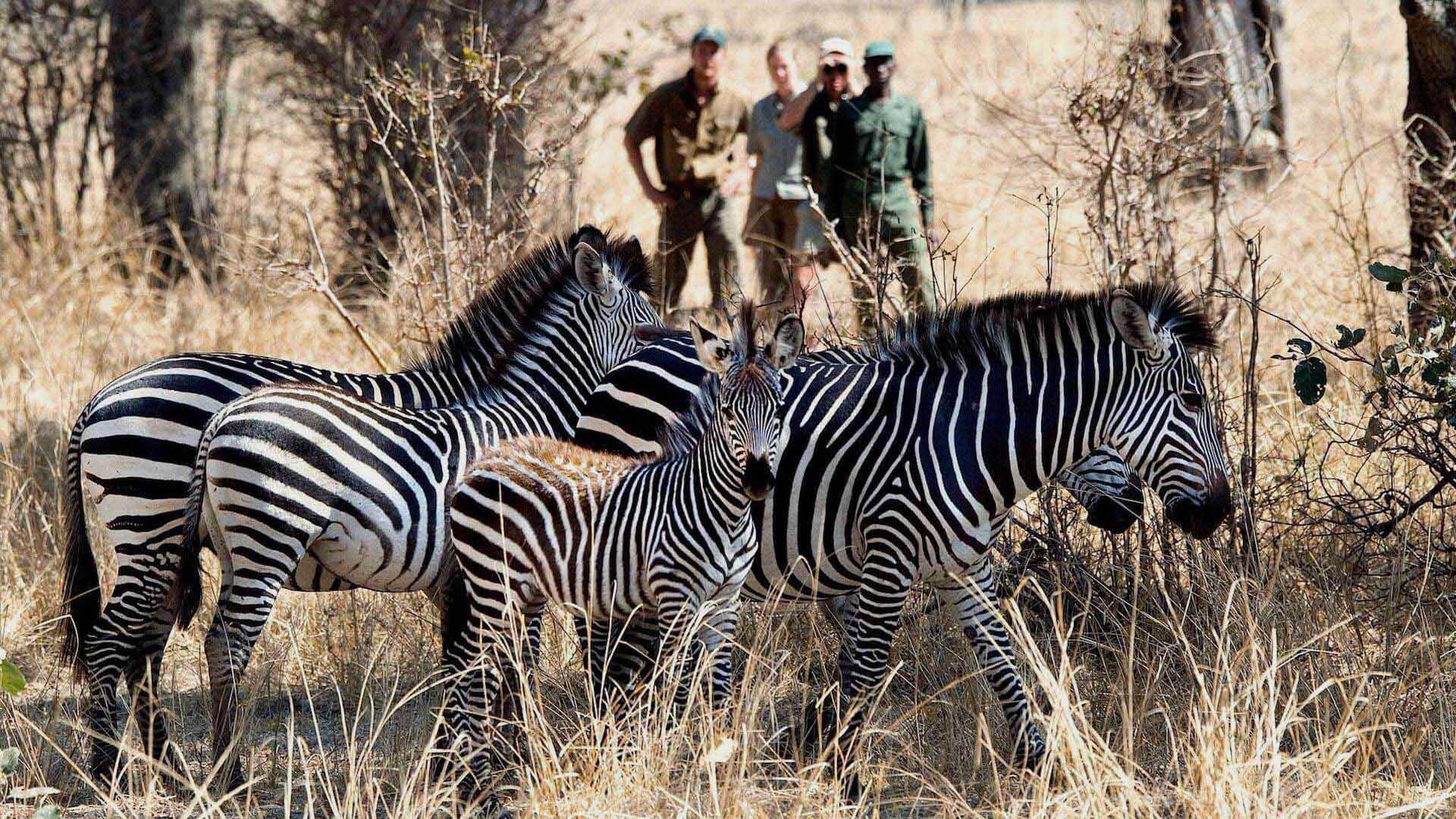 flatdogs camp zambia-lodges-beach-bush-zambia-in-style-tours-safari-packages-safaris-adventures-ocean-travel-wildlife-africa