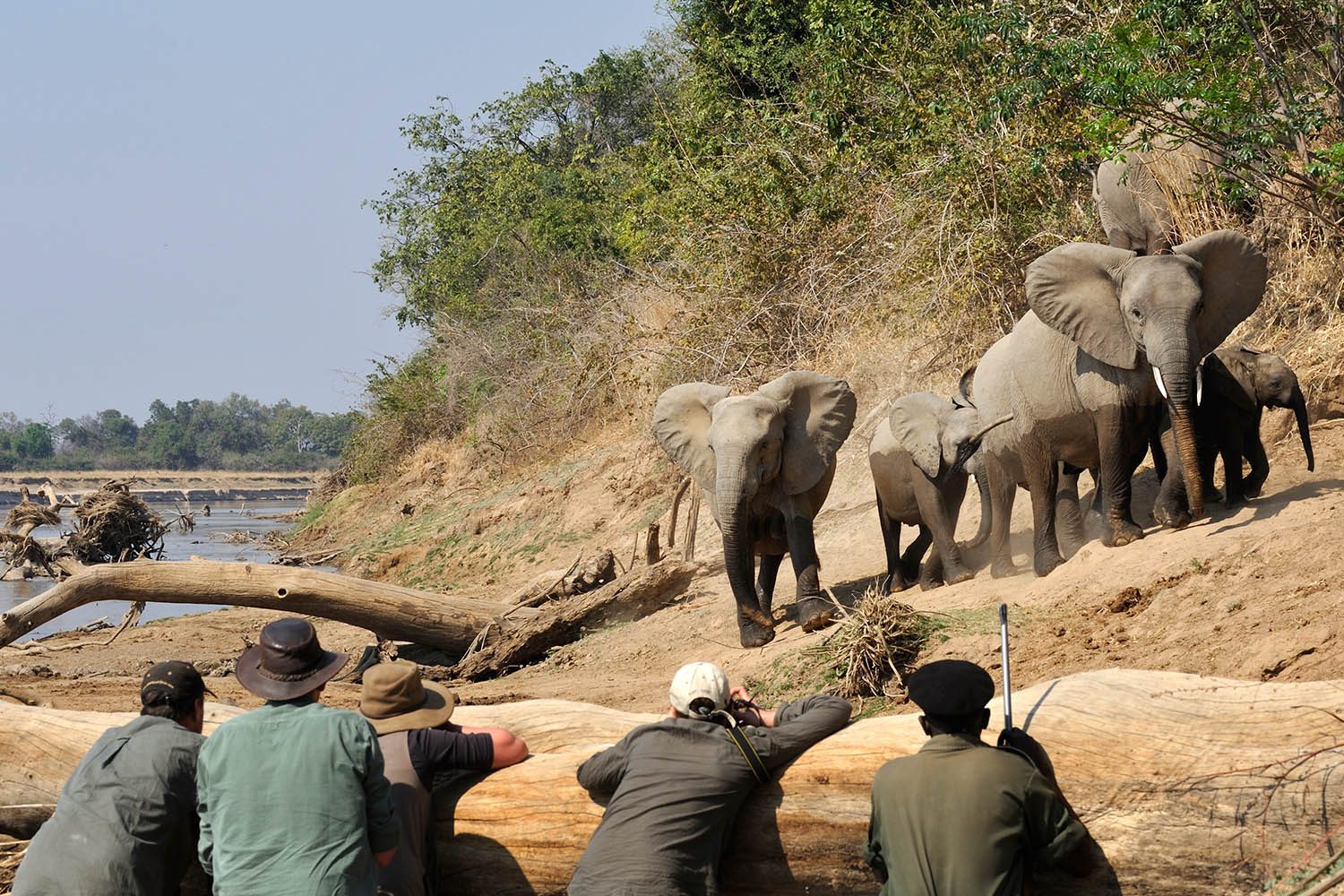 kaingo-camp-luxury-lodge-zambia-in-style-tours-safari-packages-lodges-south-luangwa-national-park-elephant-hide