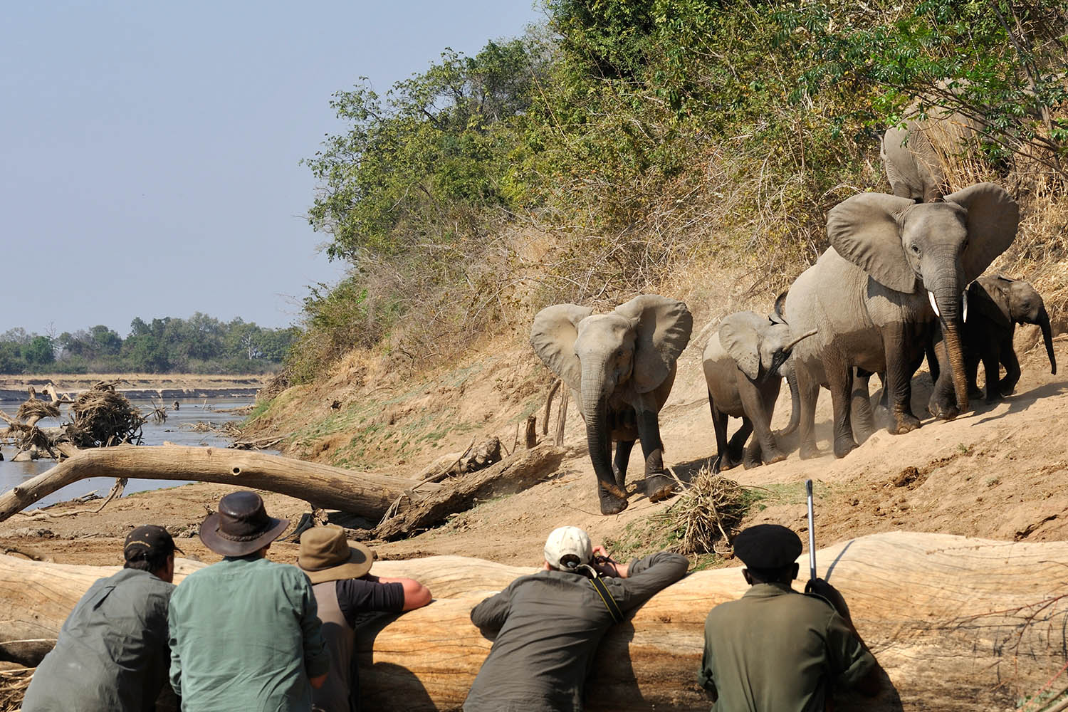 kaingo-camp-luxury-lodge-zambia-in-style-tours-safari-packages-lodges-travel-south-luangwa-national-park-elephant-hide