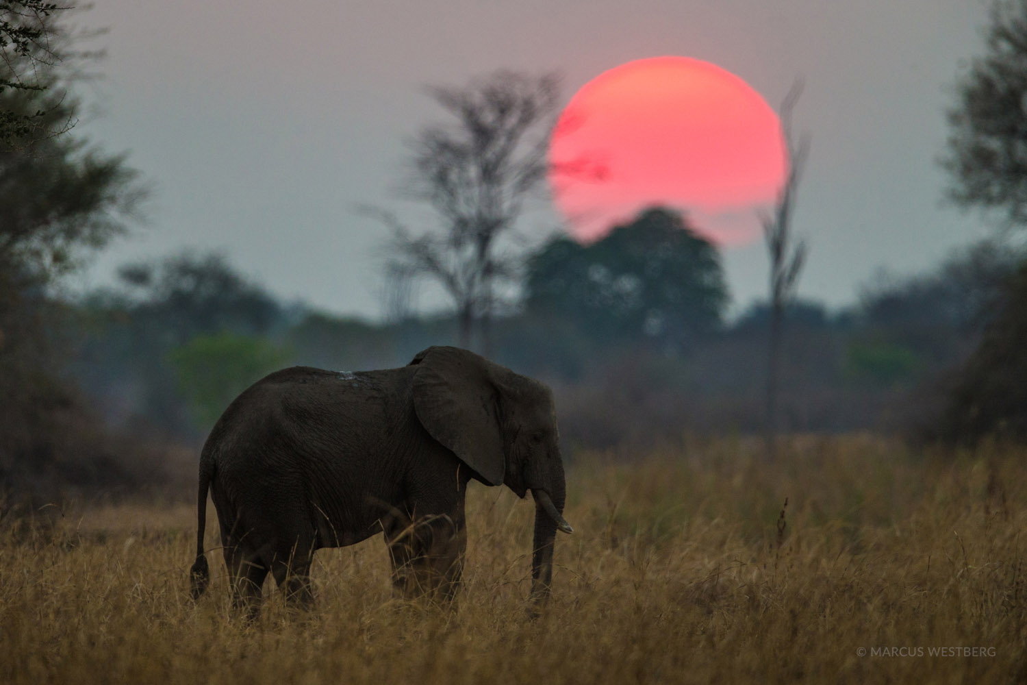 luambe-camp-lodge-zambia-in-style-tours-safari-packages-lodges-luambe-national-park-south-north-luangwa-elephant-sun