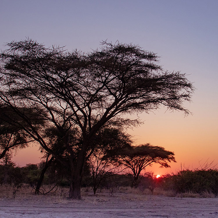 luambe-camp-lodge-zambia-in-style-tours-safari-packages-lodges-luambe-national-park-south-north-luangwa-sunset-trees-landscape