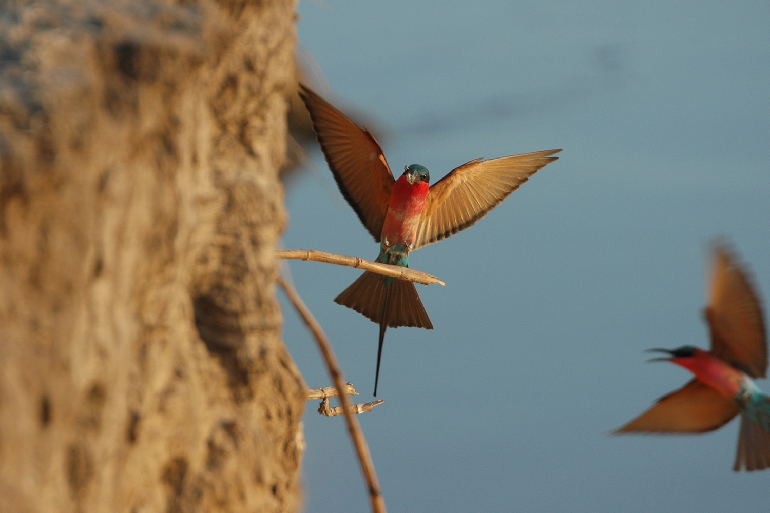 luangwa safari house lodge-zambia-in-style-tours-safari-packages-lodges-south-luangwa-national-park-carmine-bee-eater