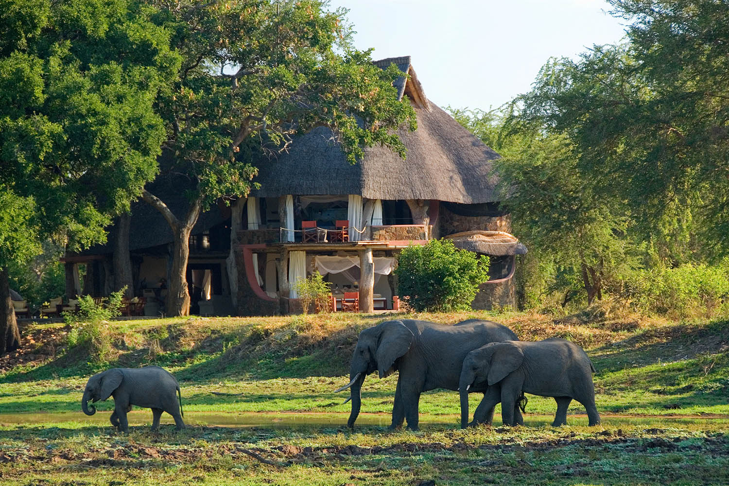 luangwa safari house lodge-zambia-in-style-tours-safari-packages-lodges-south-luangwa-national-park-elephants-walking