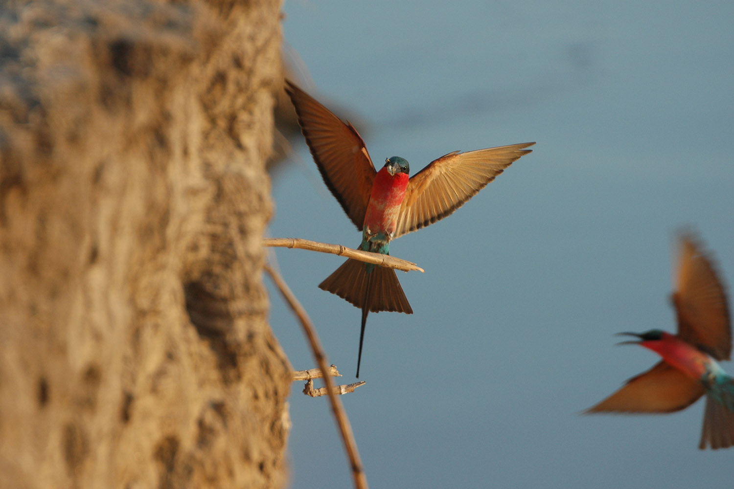 luangwa safari house lodge zambia-in-style-tours-safari-packages-lodges-travel-south-luangwa-national-park-carmine-bee-eater-birds