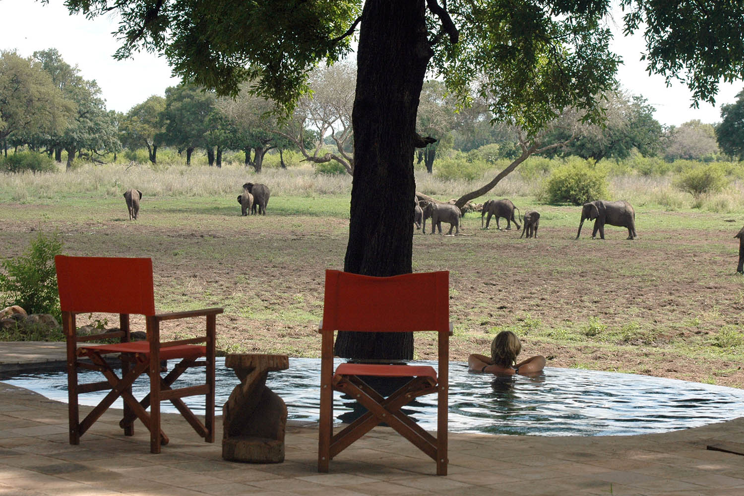 luangwa safari house lodge zambia-in-style-tours-safari-packages-lodges-travel-south-luangwa-national-park-swim