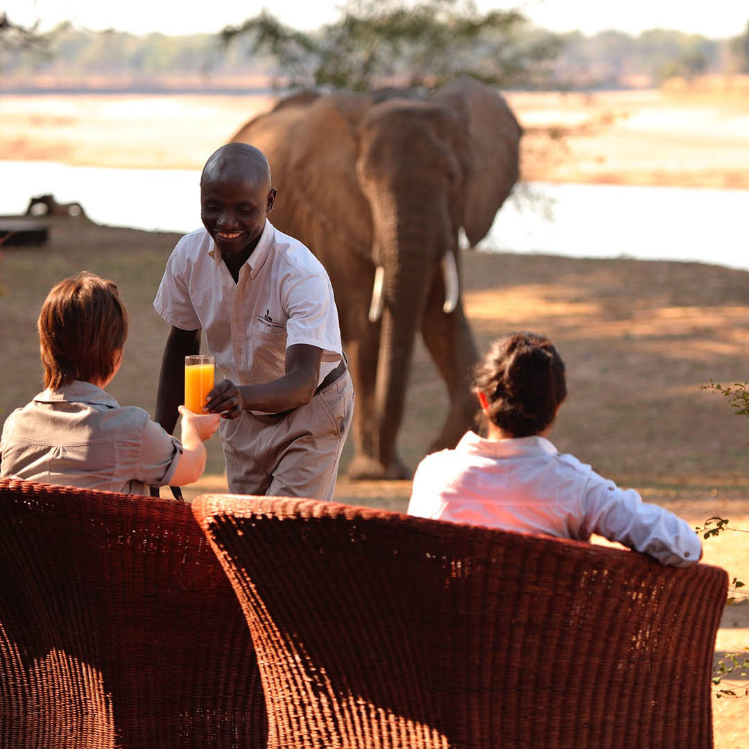 mchenja-bush-camp-lodge-zambia-in-style-tours-safari-packages-lodges-explore-south-luangwa-national-park-drinks-elephant