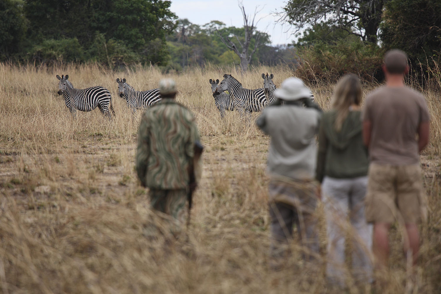 mchenja-bush-camp-lodge-zambia-in-style-tours-safari-packages-lodges-explore-south-luangwa-national-park-zebra