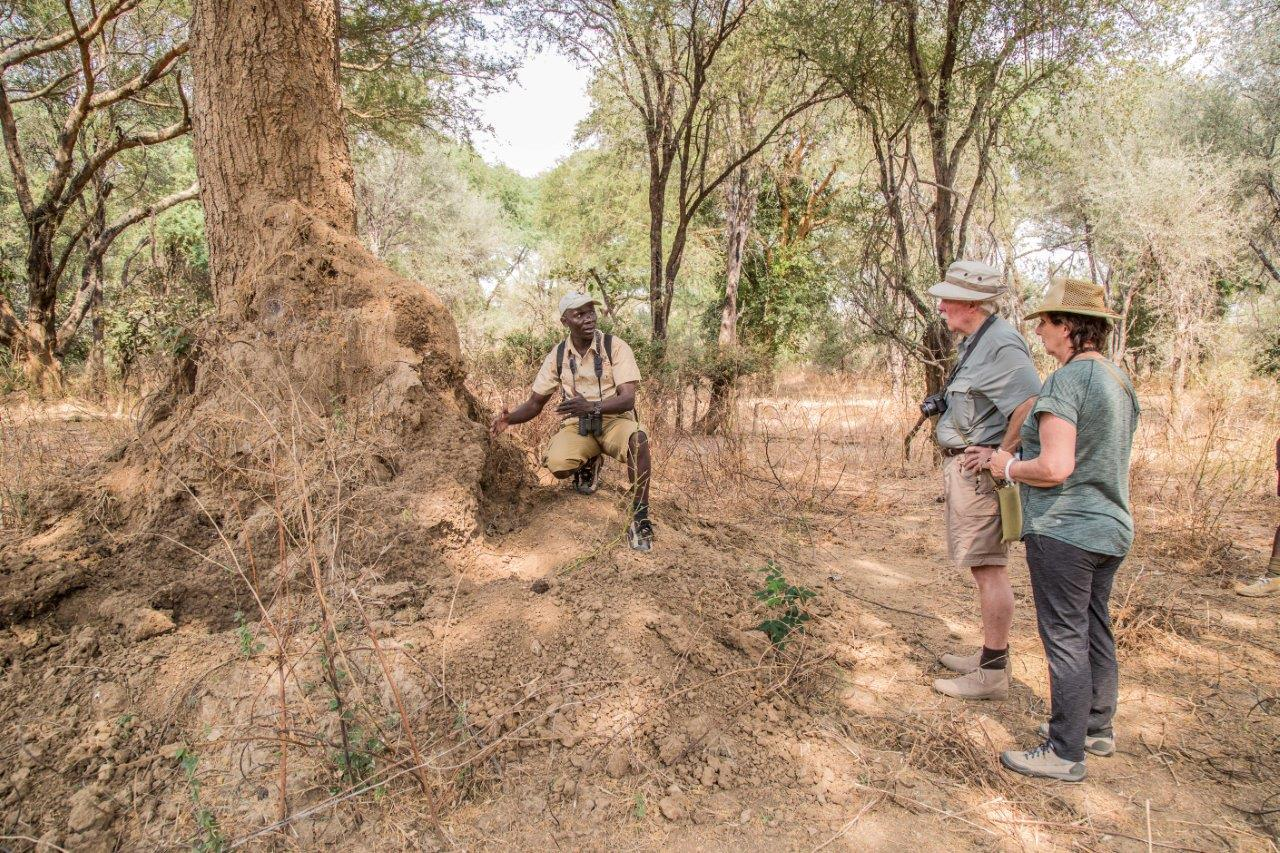 mwaleshi-camp-lodge-zambia-in-style-tours-safari-packages-lodges-travel-north-luangwa-walking-safari-guided-tour