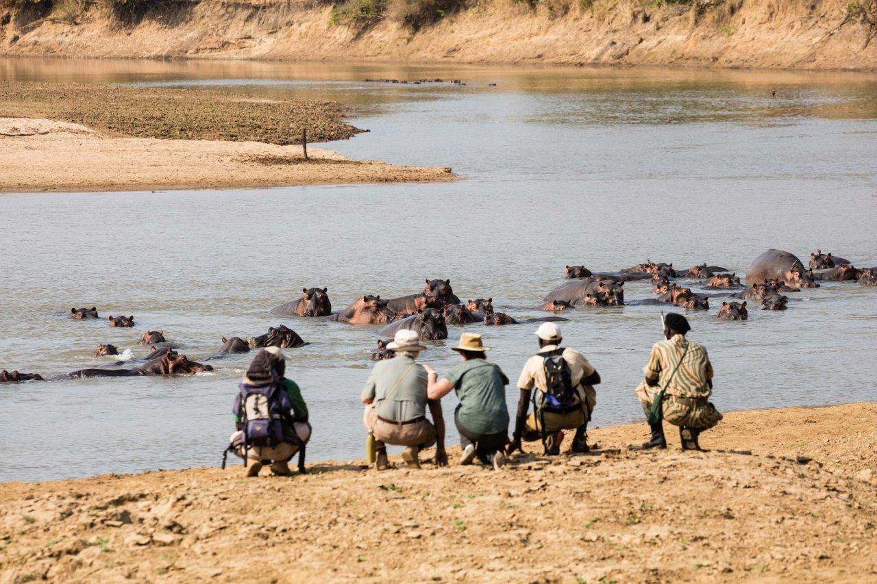 mwaleshi-camp-lodge-zambia-in-style-tours-safari-packages-lodges-travel-north-luangwa-walking-safari-hippo-river