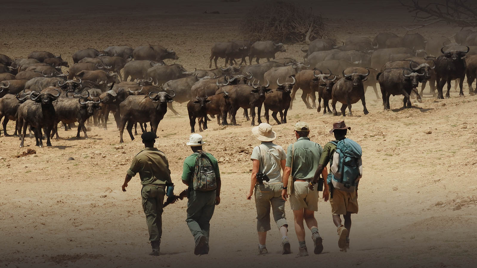 chikoko trails crocodile-camp-zambia-in-style-tours-safari-packages-lodges-travel-south-luangwa-national-park-walking
