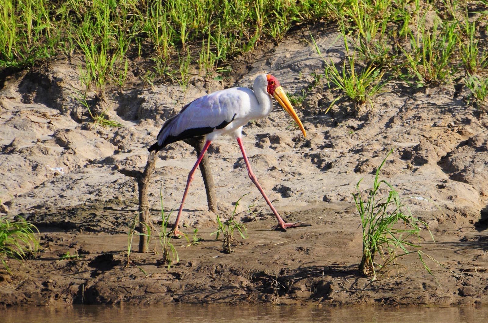 chikunto-lodge-zambia-in-style-safari-packages-lodges-luxury-tents-south-luangwa-boat-safaris-bird-wildlife
