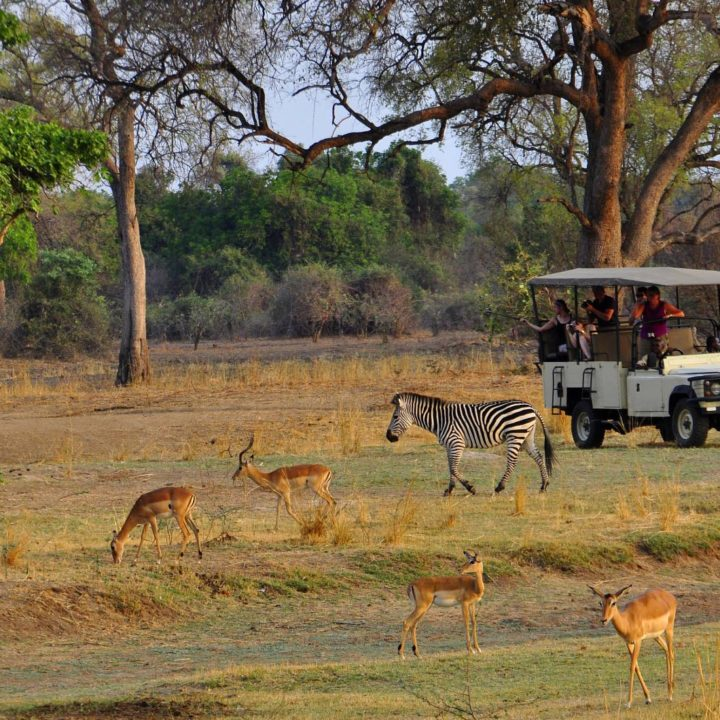 chikunto-lodge-zambia-in-style-safari-packages-lodges-luxury-tents-south-luangwa-location-game-drive-zebra